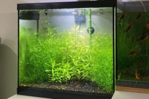 Read more about the article Guppy Grass Care Guide: Create an Underwater Jungle Aquarium