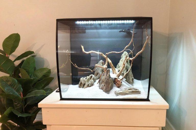 Fluval Flex 15 Review Fish Tank