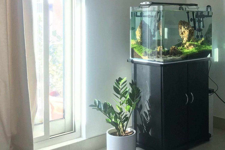 Freshwater Aquarium Best Aquarium Stand