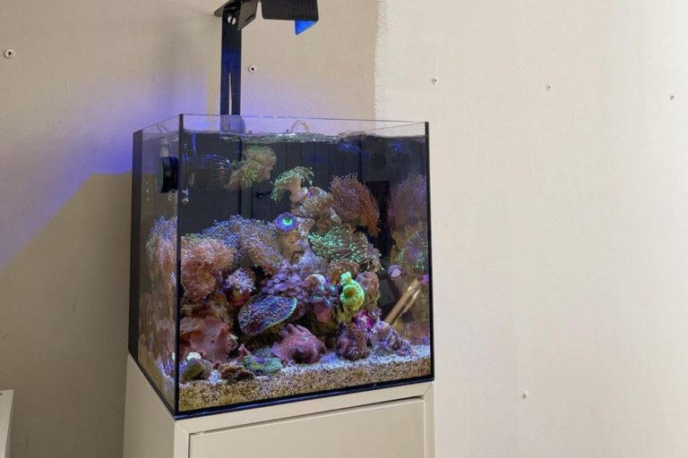 Setting up a Saltwater Aquarium Reef Tank