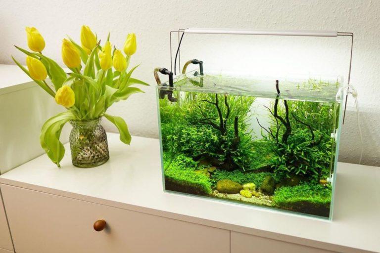 Setting up Freshwater Aquarium
