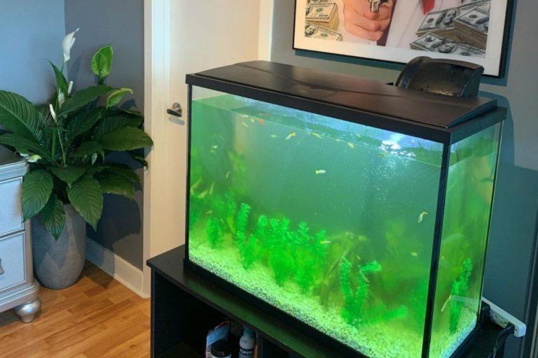 Best 40 Gallon Breeder Aquairum Option