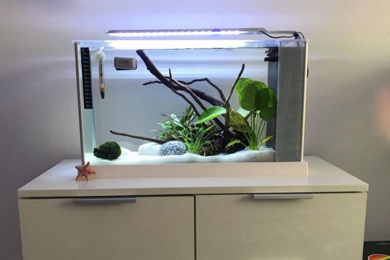 Best 5 Gallon Fish Tank Fluval Edge V