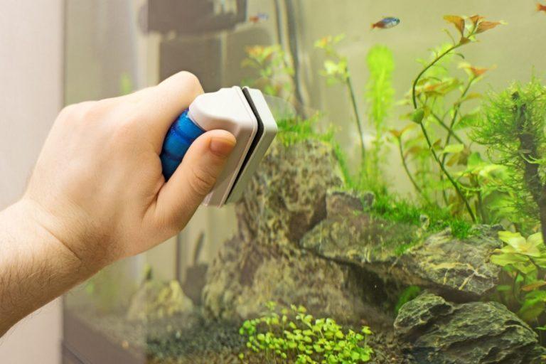 The Best Aquarium Magnet Cleaner Option