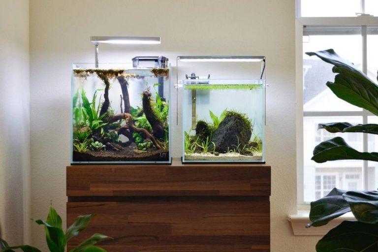 best cube aquarium