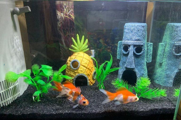 Best Spongebob Fish Tank Decorations Option