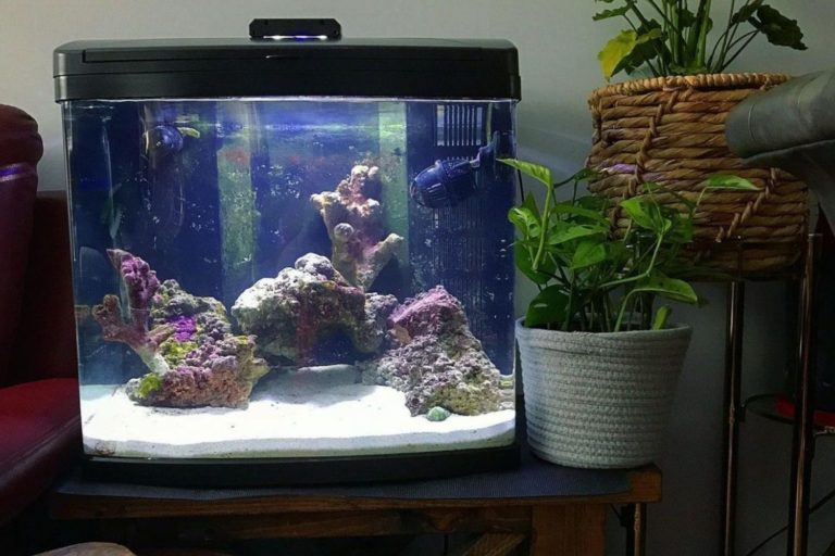 Coralife Biocube 32 Review