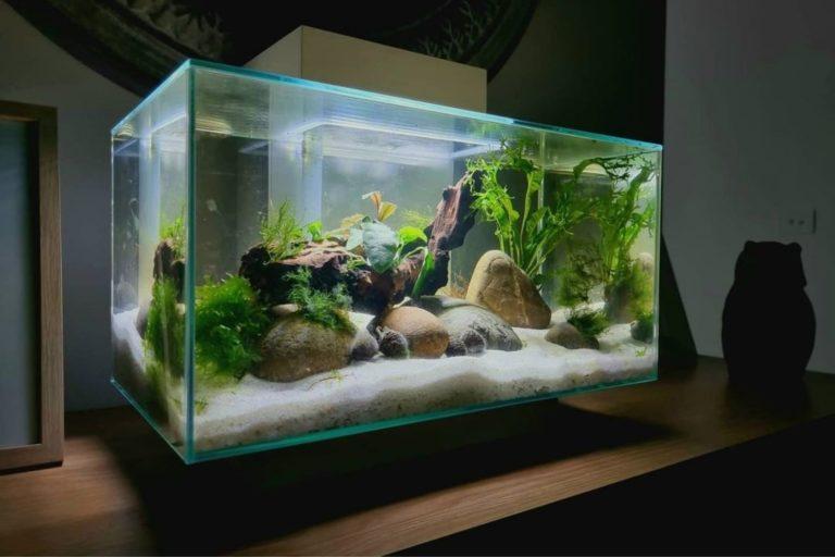 Fluval Edge Review 12 Gallon Fish Tank Filter