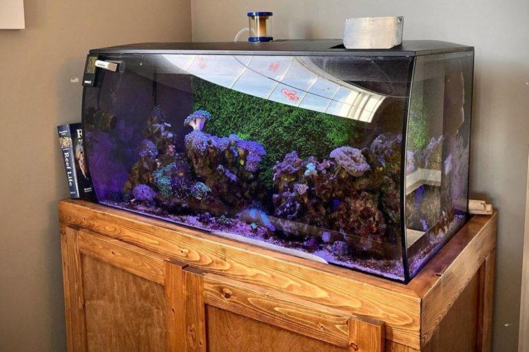 Fluval Flex 32.5 Reef Tank Review
