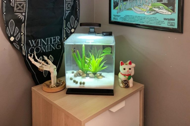 Tetra Cube 3 Gallon Fish Tank Review